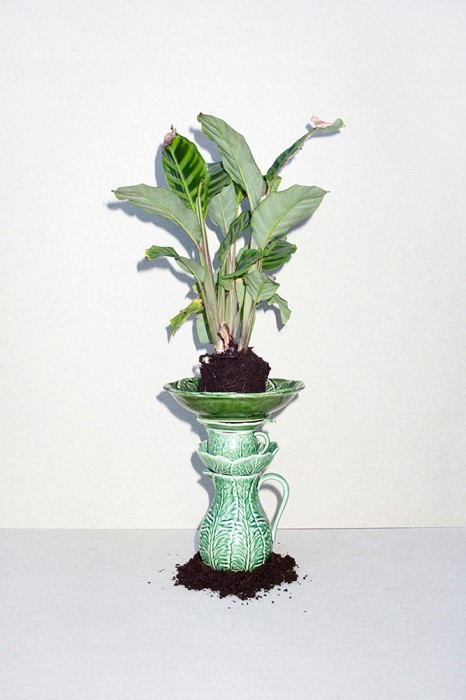 plant_stack