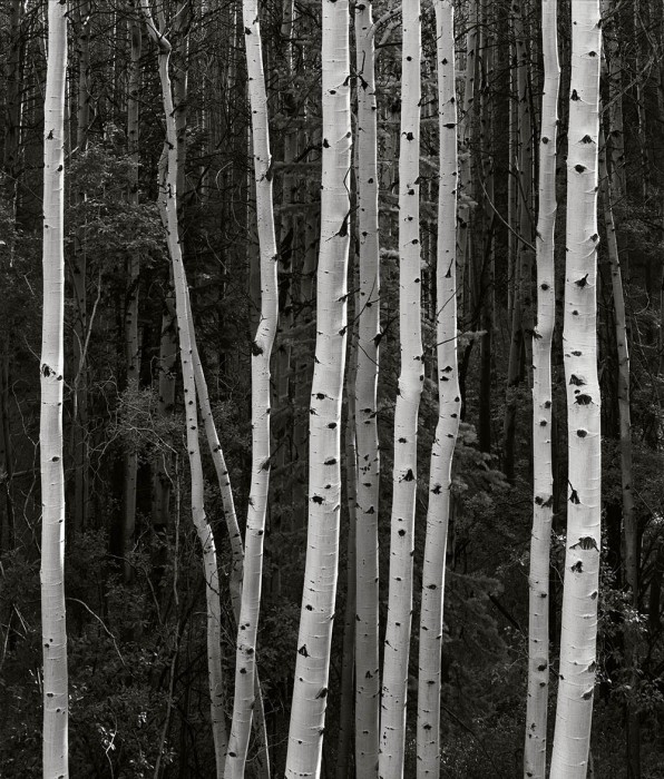 Santa Fe National Forest, New Mexico 1987