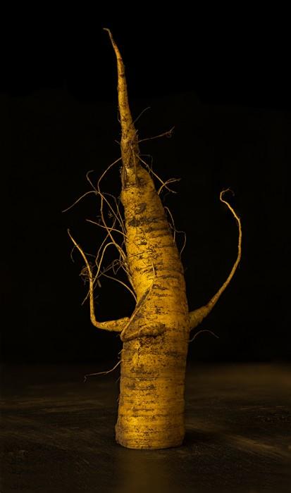 Carrot #1