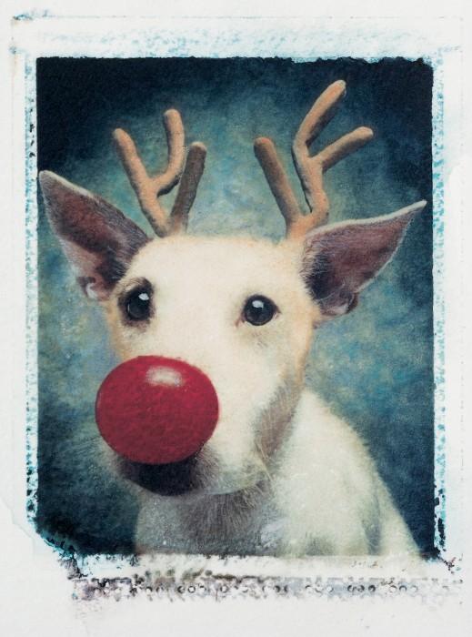 Rudolph+1990