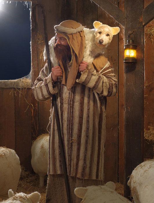 Sheep-dog-2010