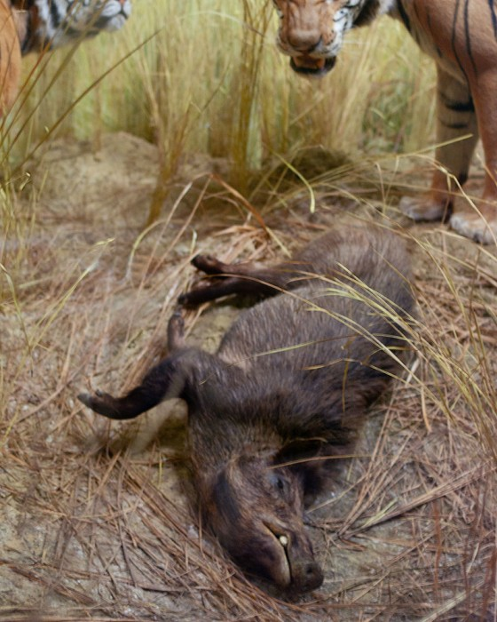 Wild Boar, from the series Another Death