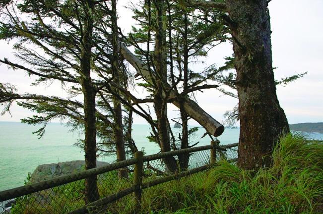 14-IMG_5247 broken tree4