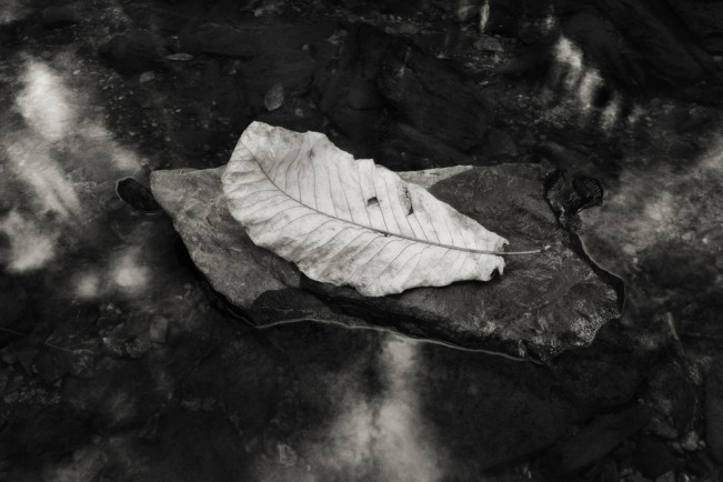 Jacob Long Leaf Study LI