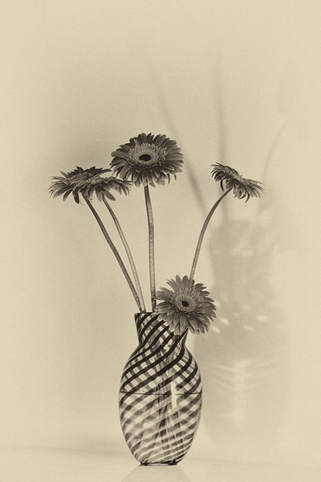 Still Life with Gerbera