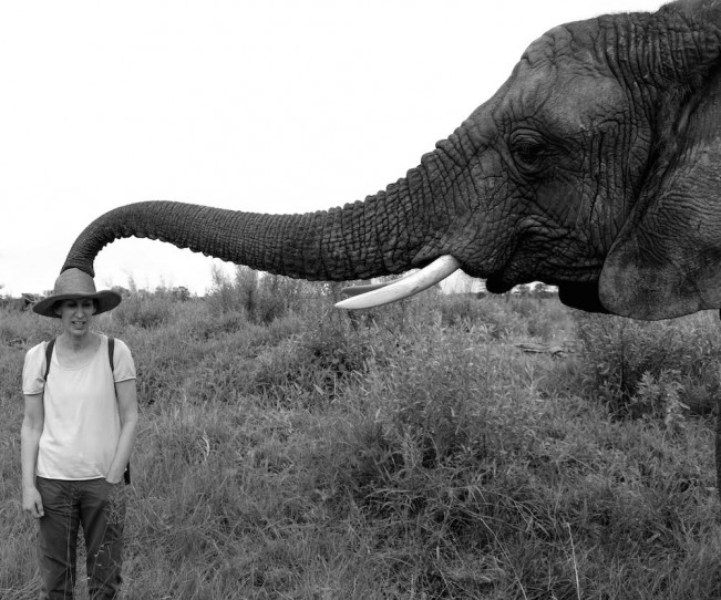 elephant (1 of 1)