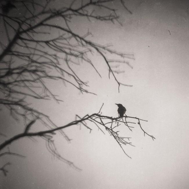valerie_steinkoenig_birdscapes-ztejas
