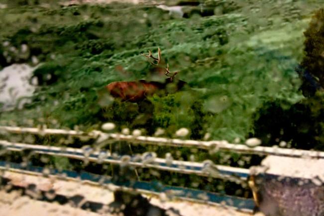 D2. lamar valley elk