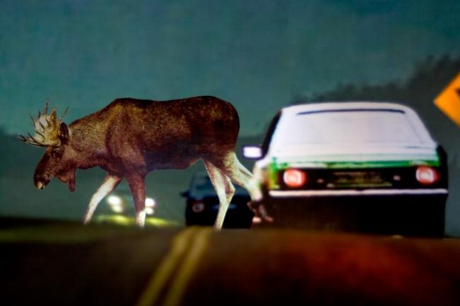 D3. moose xing