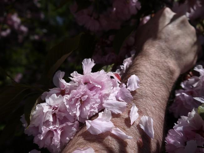 KANE-jim-magnolia-spring