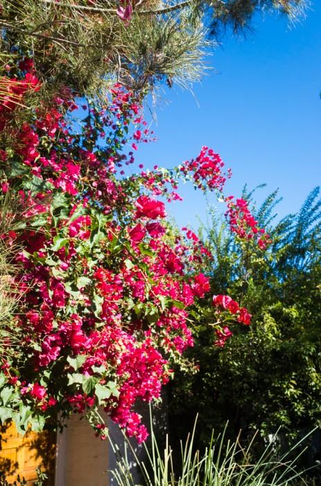 Kevin Michael Klipfel, Lola Villa, Palm Springs, CA