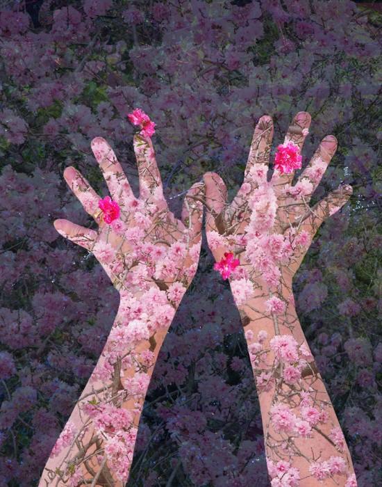 SandraKlein_Blossoms