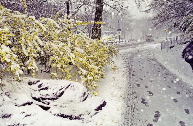 Spring setback © Norman Borden