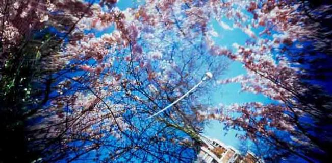 St-Cyr-Bob-Spring