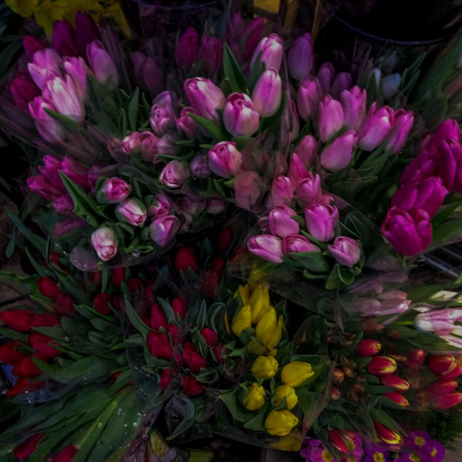 Grocery Store Tulips