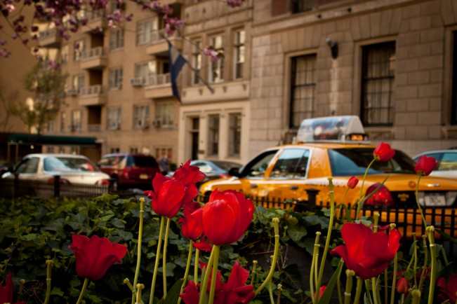 tulip-on-park-avenue