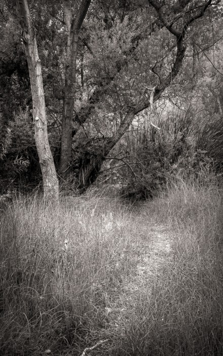The Deer Path