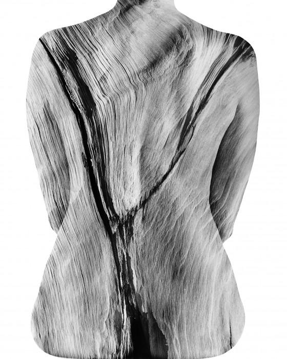 Pinus longeava 1-24, Steve Engelmann - Ancient Wood