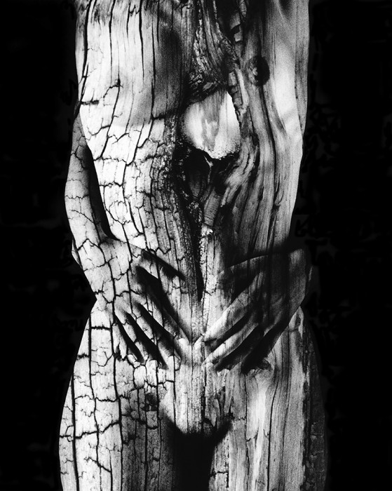 Steve Engelmann - Ancient Wood