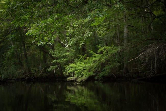 Deep Creek – Hastings, FL The creeks are dark in the summer with a thick canopy of green leaves. I look for details and gestures in the trees, and this branch reminded me of my own journey, alone and illuminated.