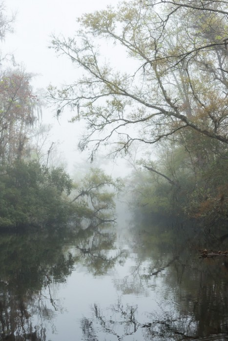 Thomas Creek – Jacksonville, FL Rarely do we have fog on the creeks. Sometimes in the spring with a combination of the right temperatures and dew points we experience sea fog that pours into the surrounding areas. I was thrilled this morning to find a foggy creek and for about an hour I found myself in another world.