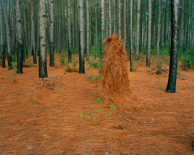 12. Ghillie Suit (Pine Straw), 2011