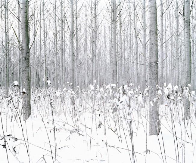 Daniel Kovalovszky GREEN SILENCE 4