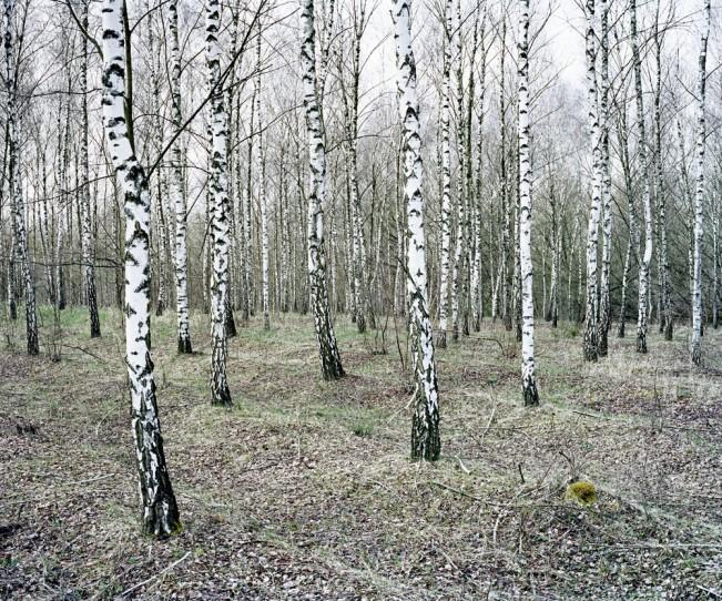 Daniel Kovalovszky GREEN SILENCE 8