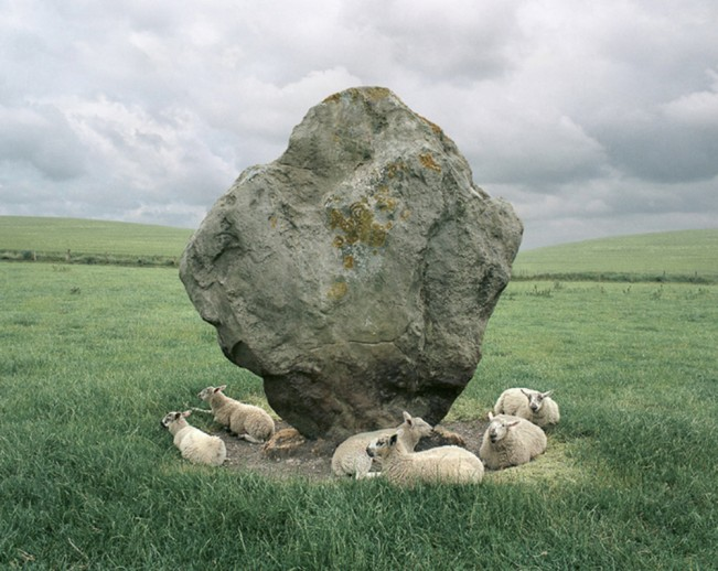 BarryAnderson-Sheep and Standing Stone, Avebury, England 1995