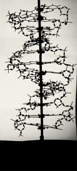 Double helix_built by Francis Crick, c1953_(courtesy of Laboratory of Molecular Biology)