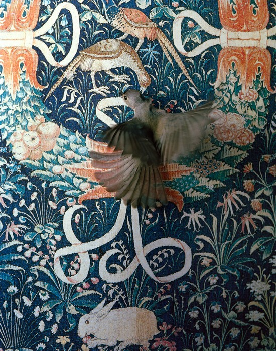 M1259UR_Tapestry_flutter_2013 001
