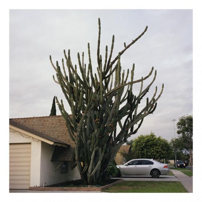 Giant Plant 001