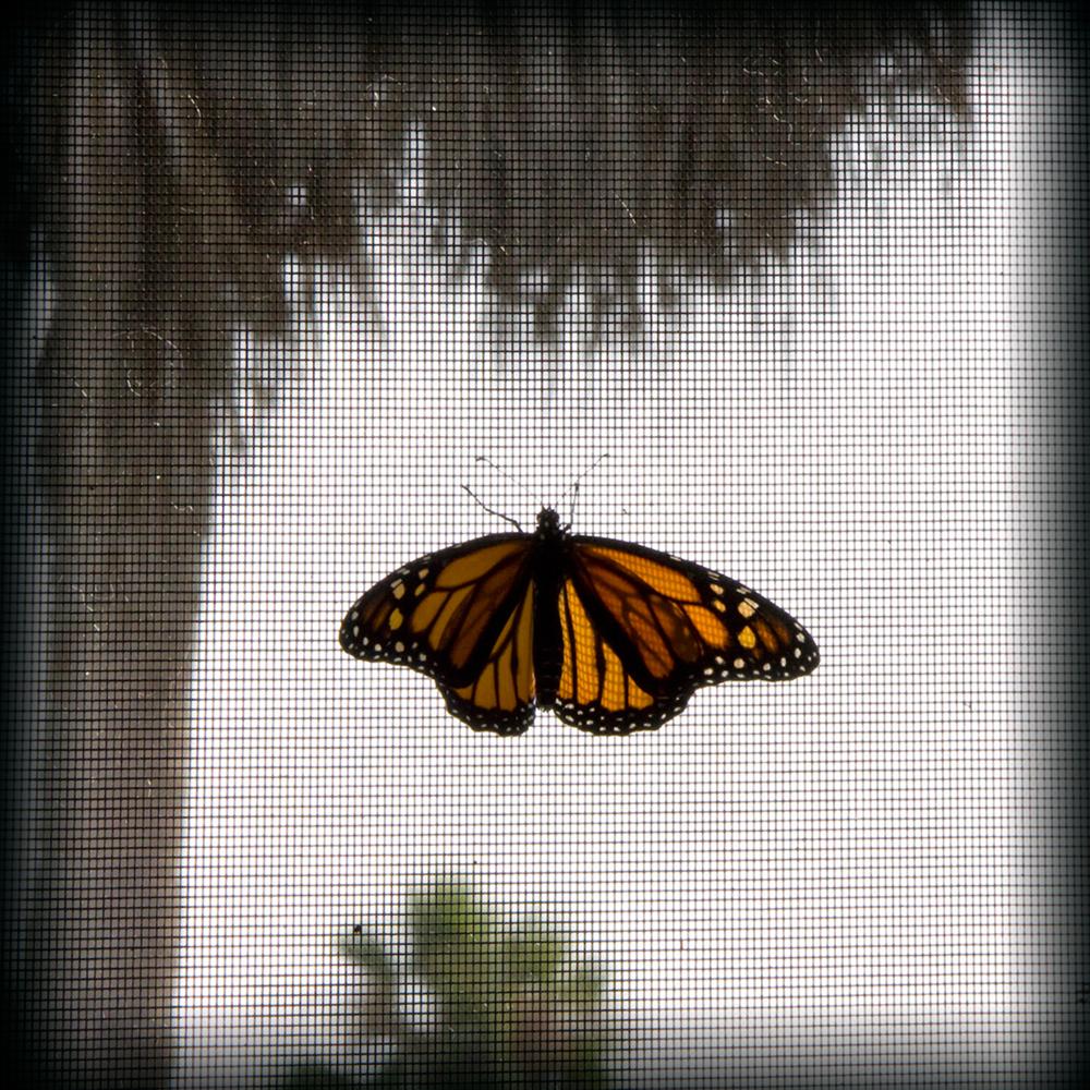 12-Butterfly