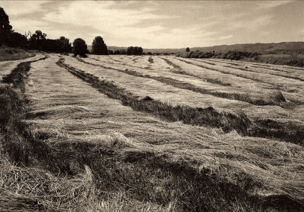 2 Sauvie Island grass