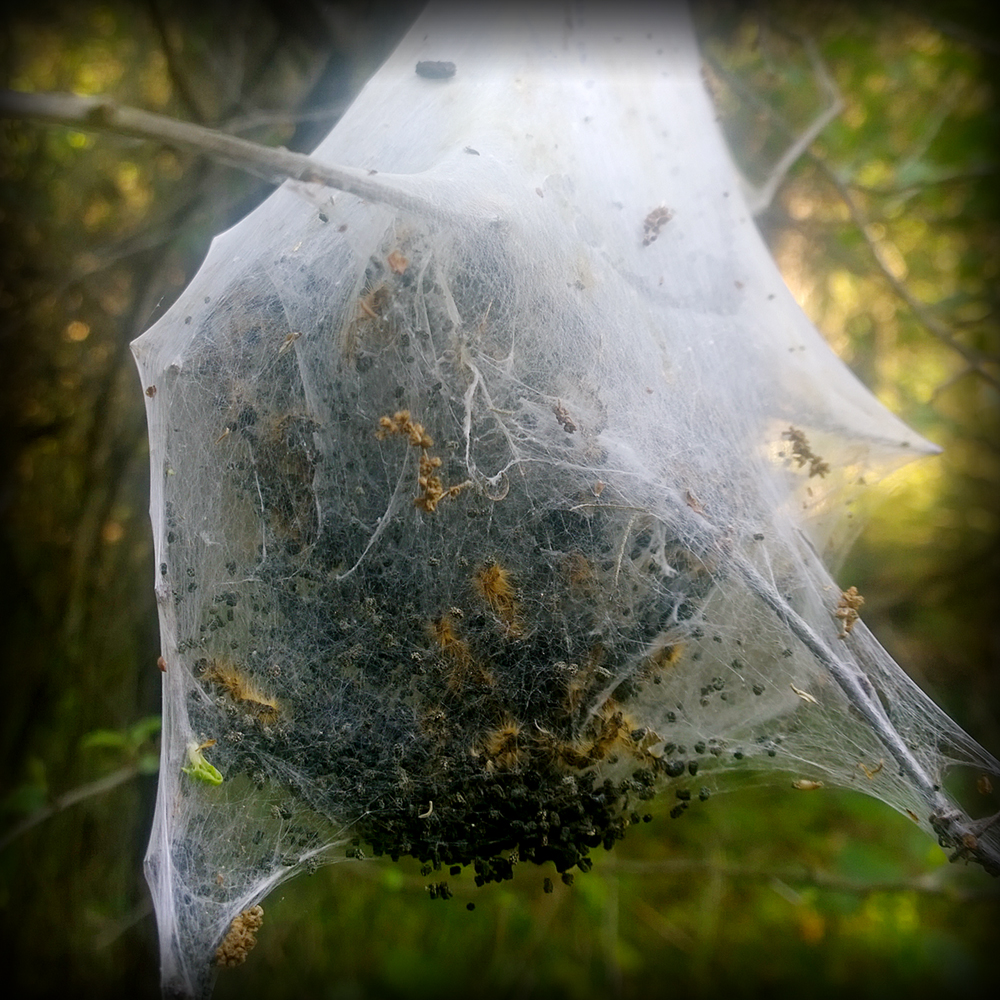 7-Web