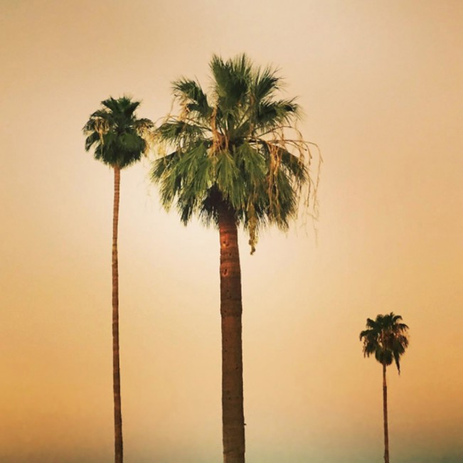 @Kim McCloud, Palm Tree Series, kimmccloudxo_Instagram