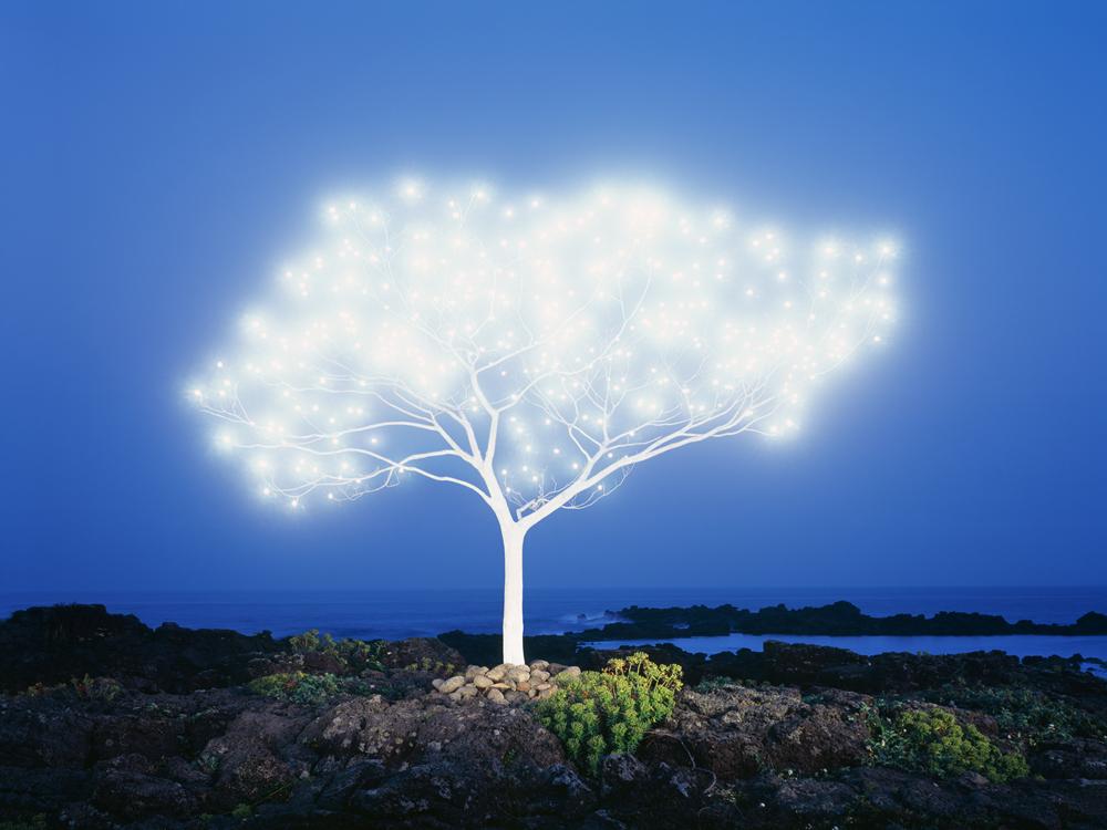Tree of Life 5-1-1