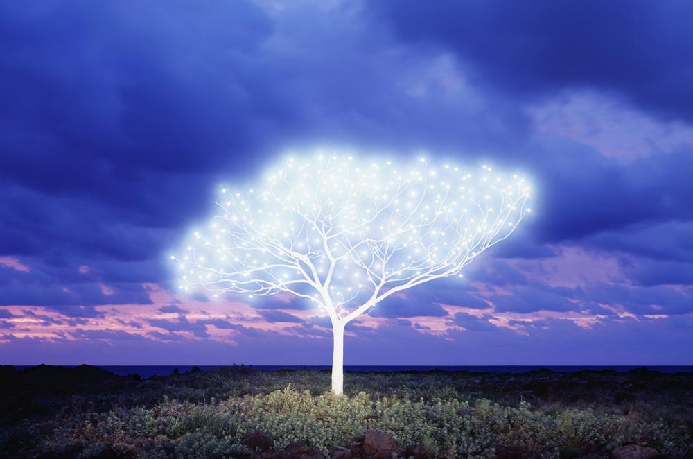 Tree of Life 5-1-5