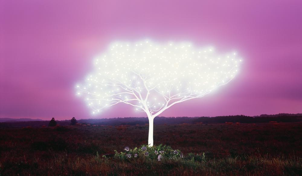 Tree of Life 5-2-2