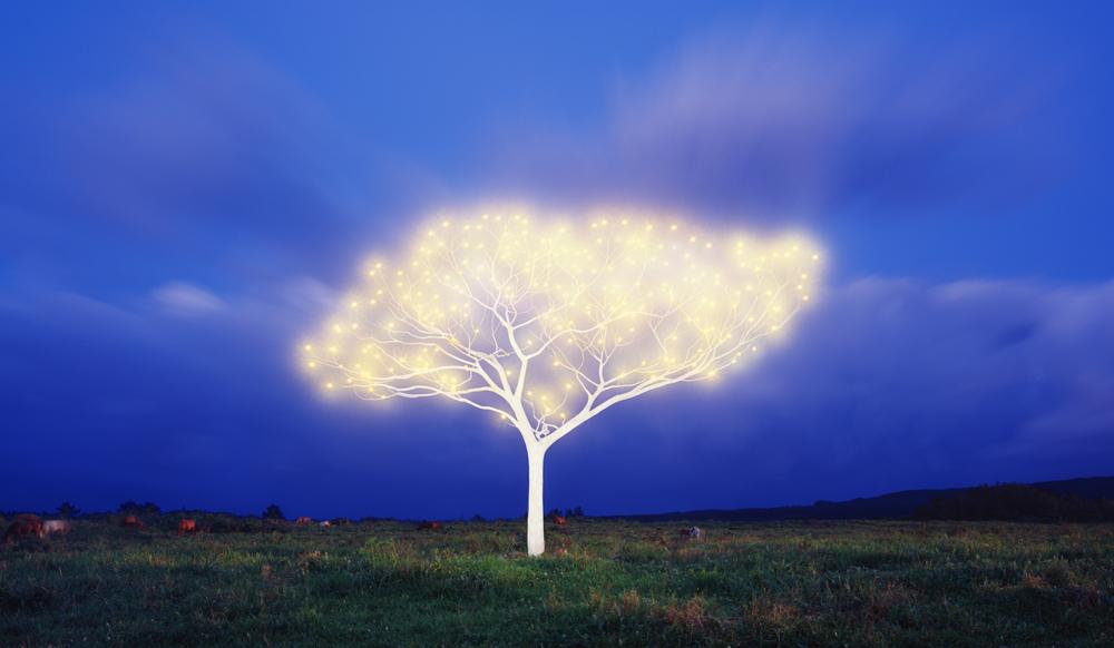 Tree of Life 5-2-4