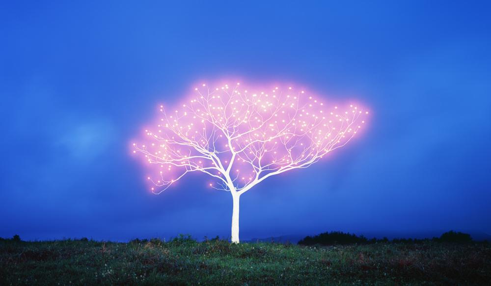 Tree of Life 5-2-6