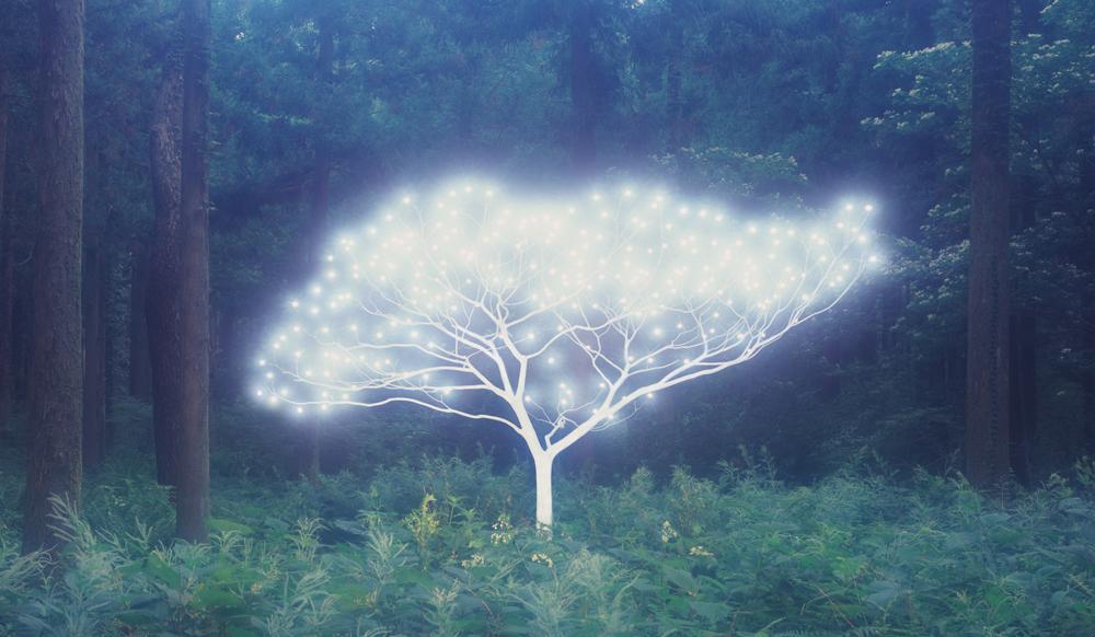Tree of Life 5-3-7