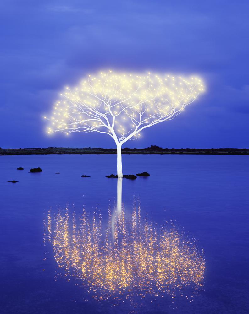 Tree of Life 5-4-10