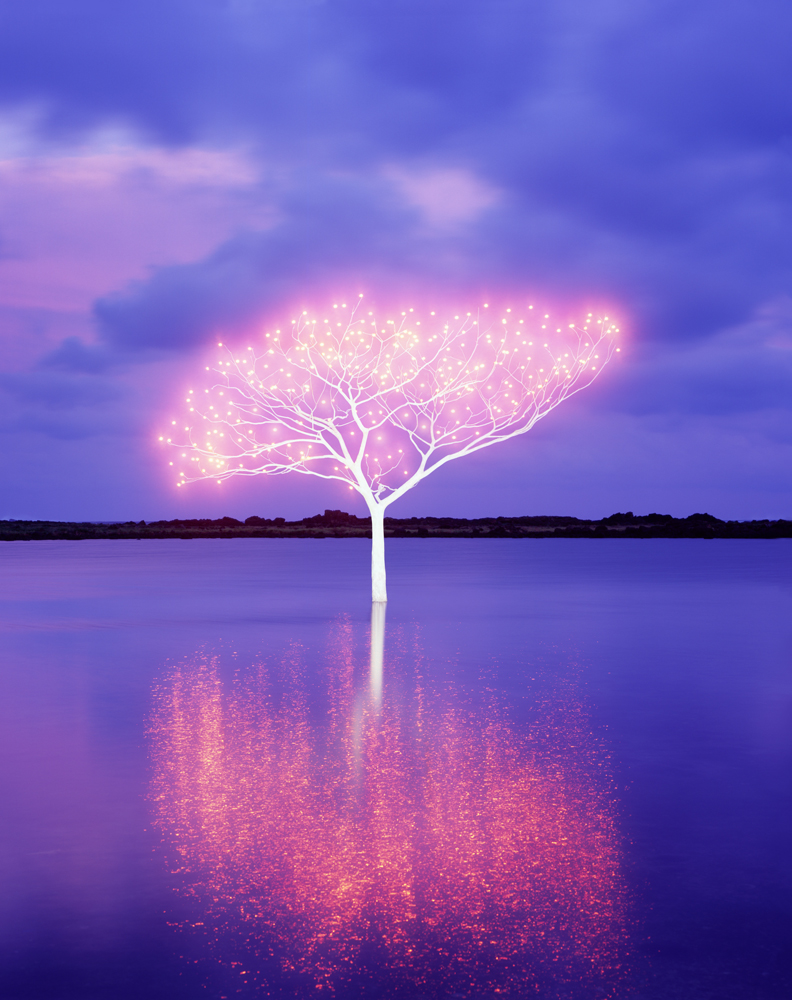 Tree of Life 5-4-8