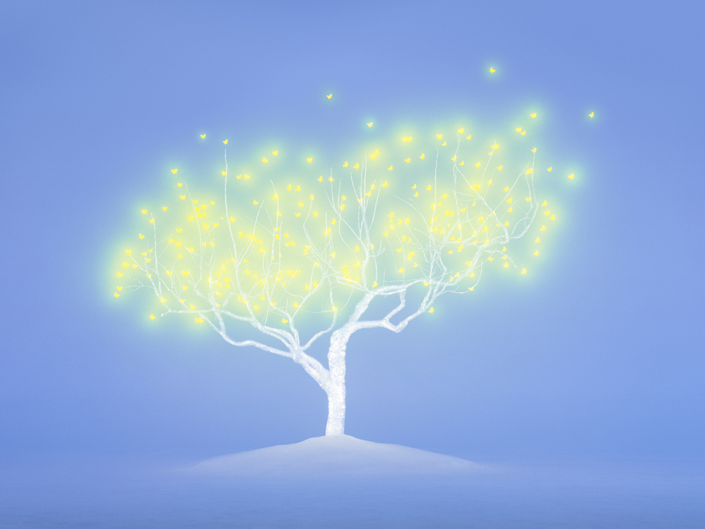 Tree of life 4-6