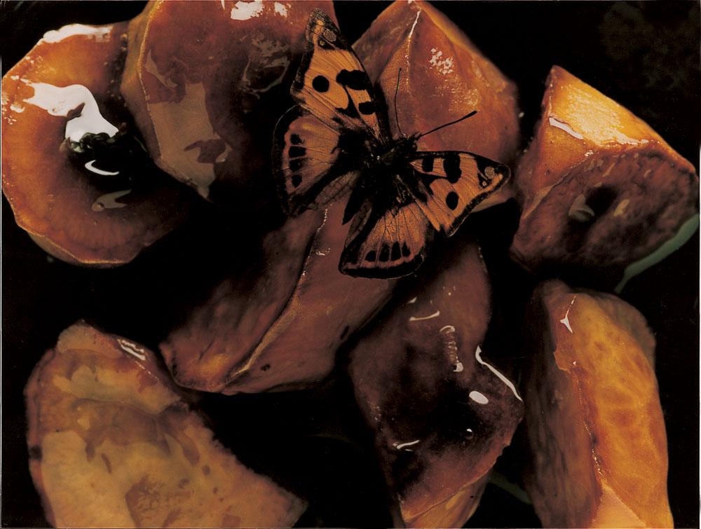 butterfly07_2000