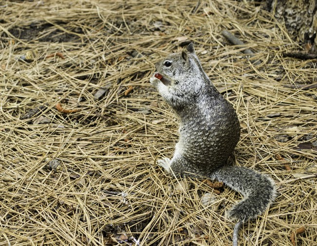 squirreltiny
