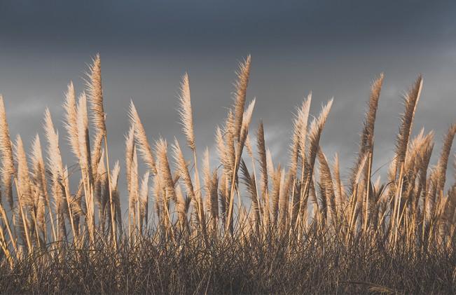worrell_seagrass