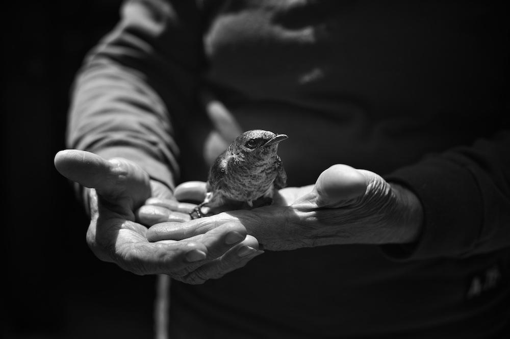 Tytia_Habing_BlueBird