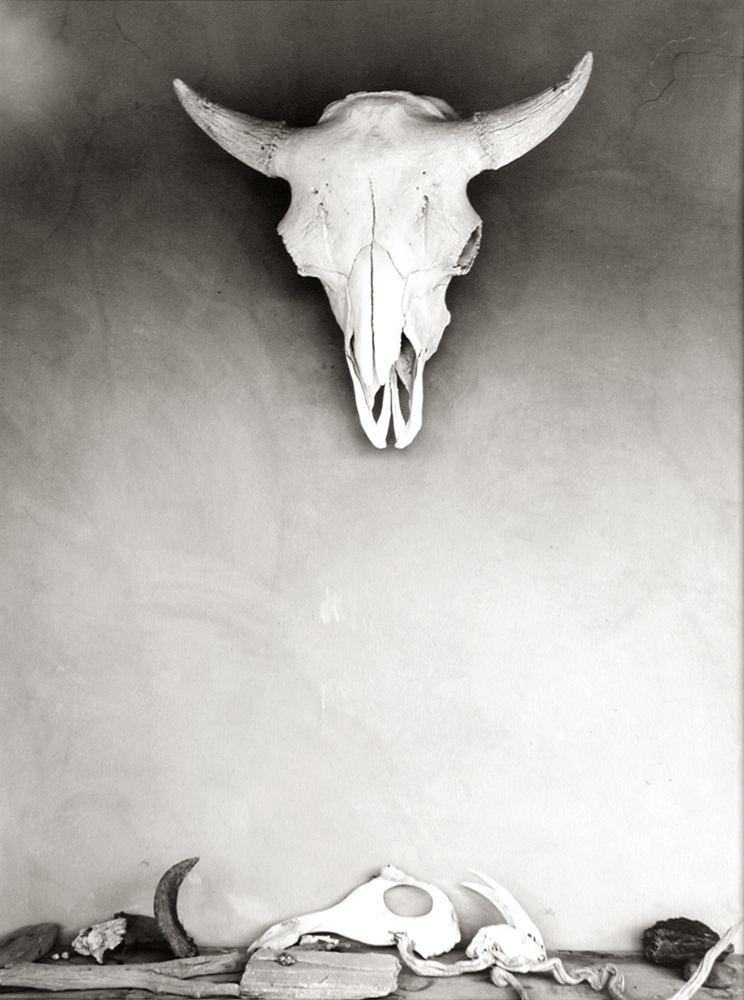 Webb - O'Keeffe - Skull on Wall